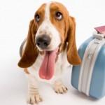 Urlaubsreise mit dem Hund