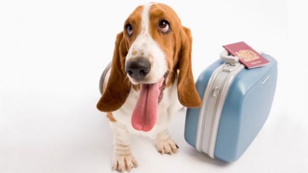 Hund in Urlaub
