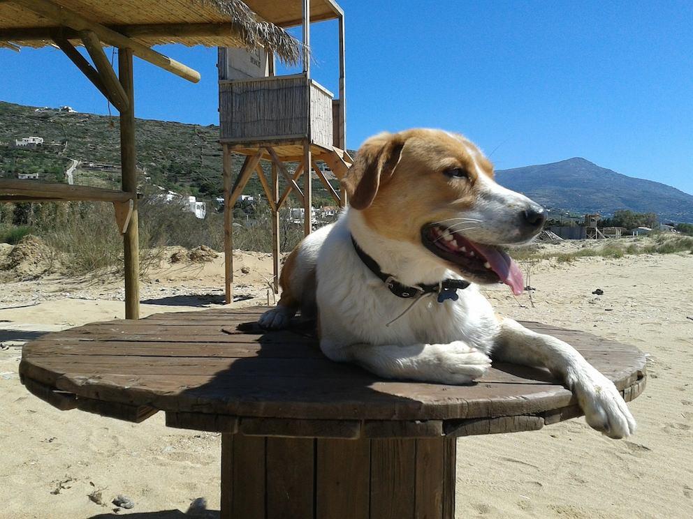 Urlaubsreise mit dem Hund buchen
