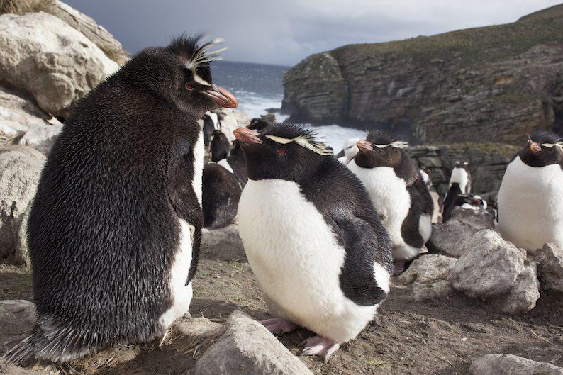 Pinguine Antarktis Hurtigruten buchen