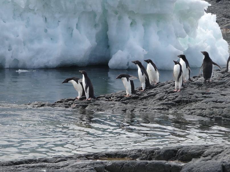 Antarktis Reisebericht buchen Reisebüro Regensburg