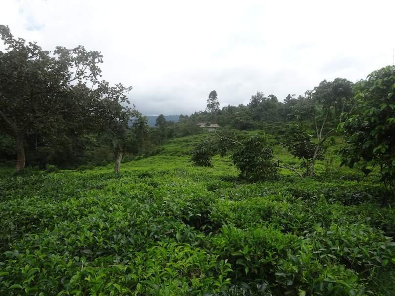 Urlaubsreise in Uganda buchen