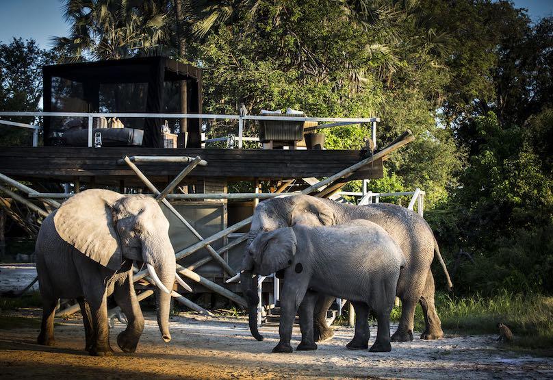 Abu Camp Elefanten Hotel