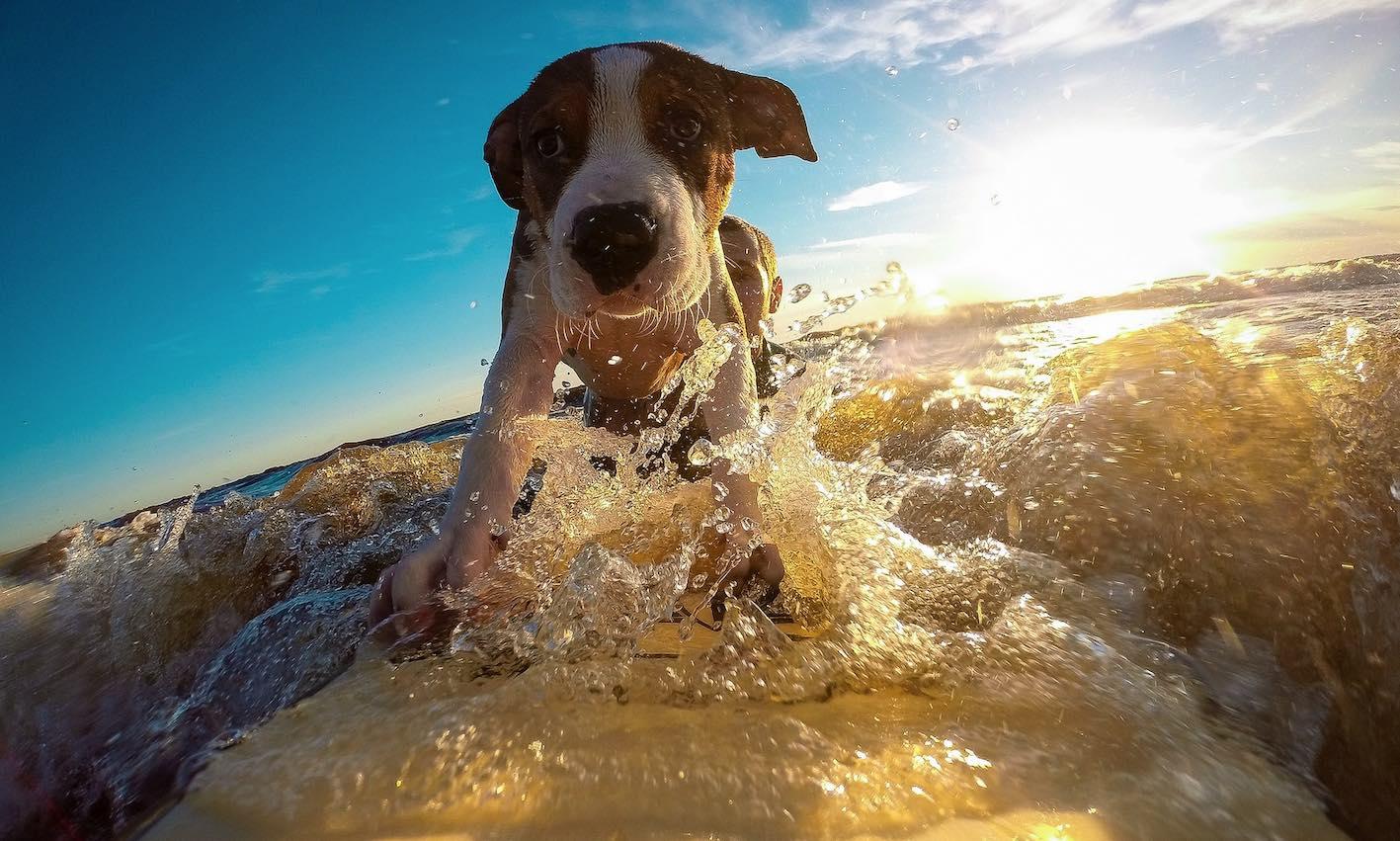 Luxusurlaub mit Hund buchen
