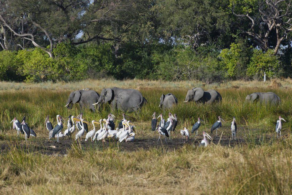 Elefanten und Vögel