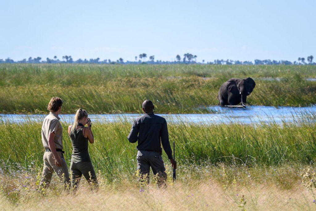 dumatau Beobachtung Elefanten im Wasser