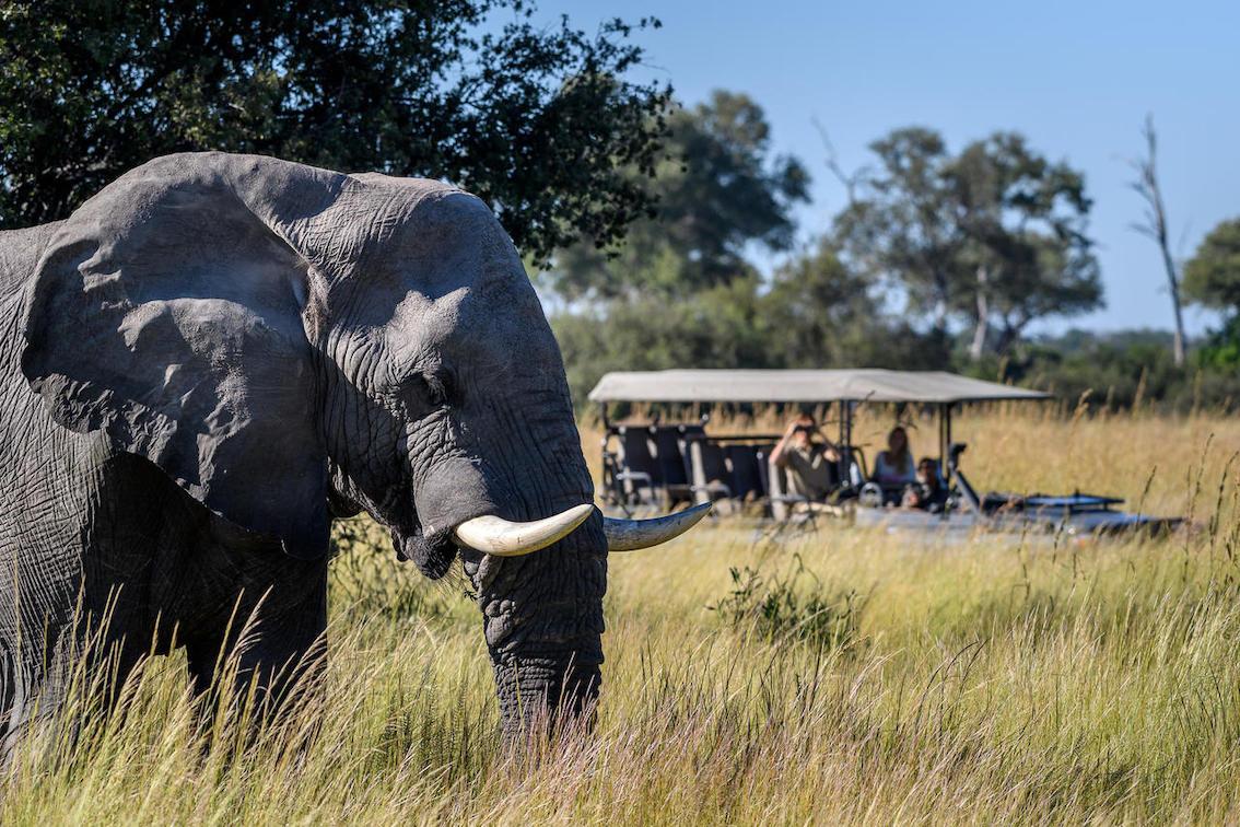 Wilderness Dumatau Pirschfahrten zu Elefanten