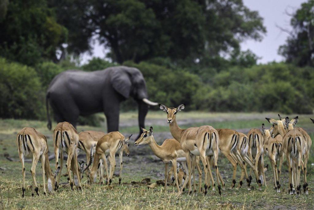 King Pool Camp Elefant und Tiere