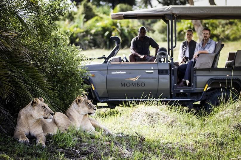 Mombo Camp Afrika Loewenbesichtigung
