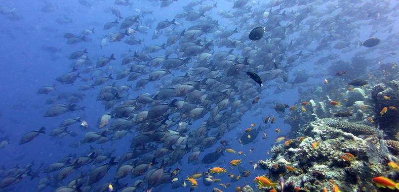 Unterwasserwelt Mosamik