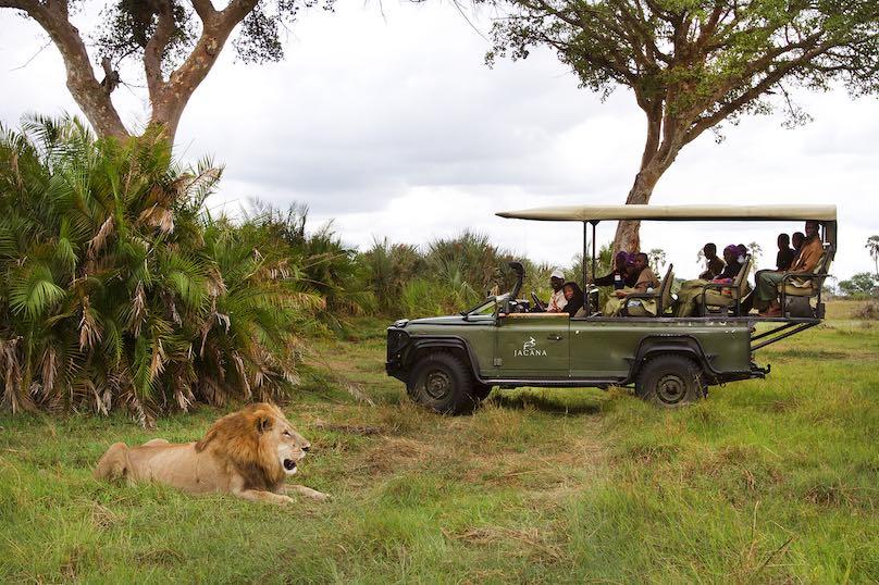 Wilderness Safari Beobachtung Loewe