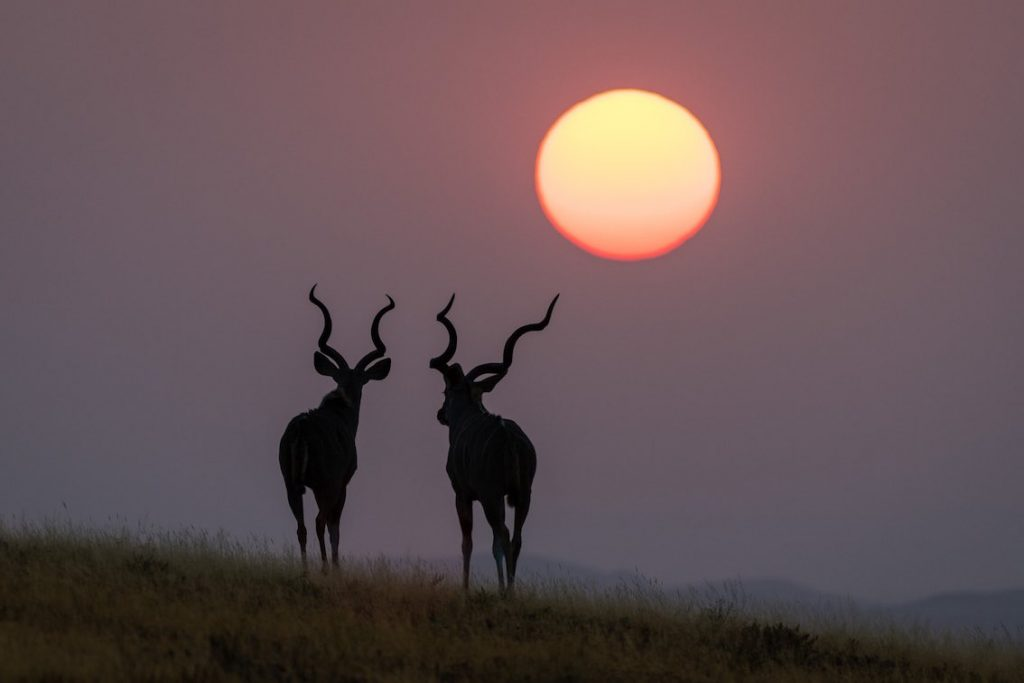 damaraland zwei tiere in Sonnenuntergang in namibia